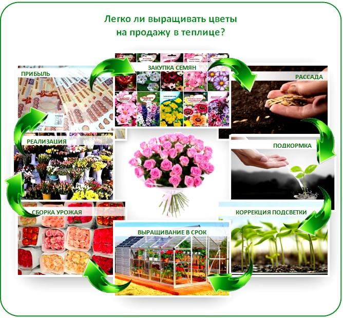 Бизнес на цветах в теплице