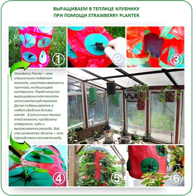Strawberry Planter для выращивания клубники