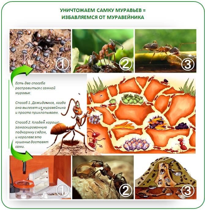 Как обезвредить муравейник