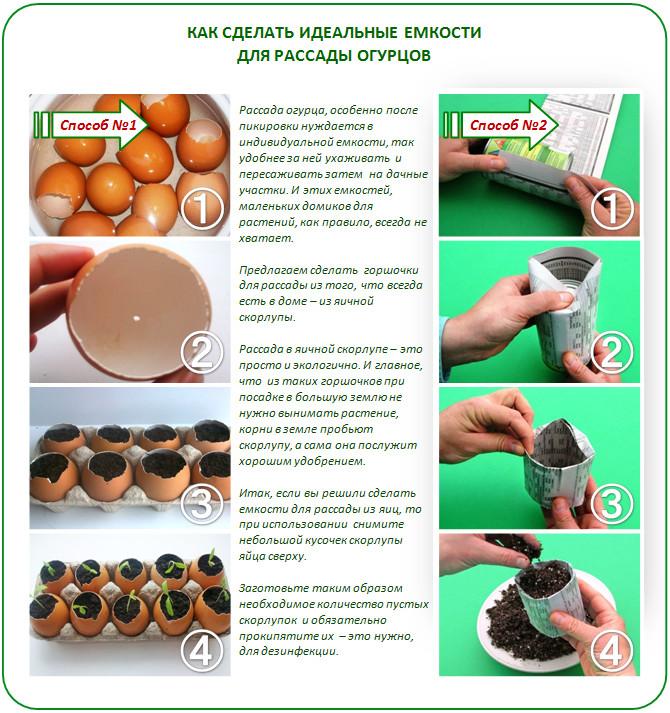 Как приготовить семена из огурцов в домашних