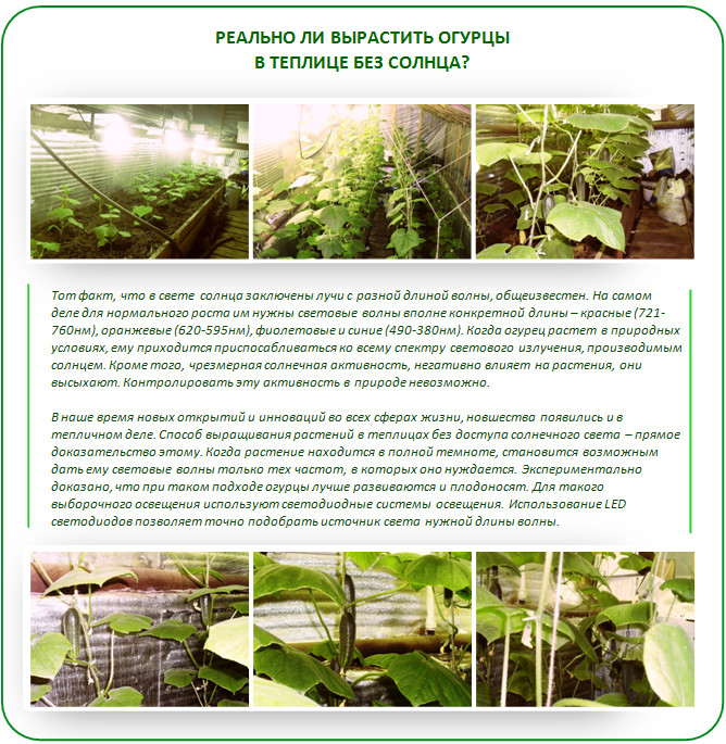 Выращивание огурцов в теплице затраты 85