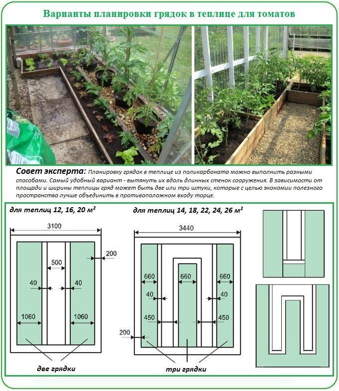 Как планировать грядки для посадки помидор в теплицу из поликарбоната