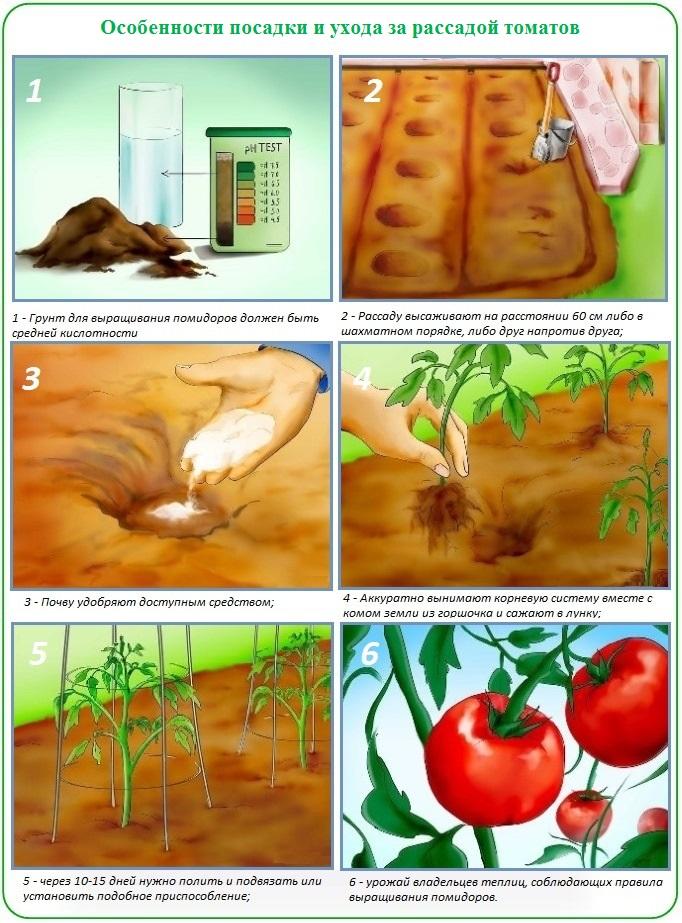 Как подготовить теплицу и грунт для посадки рассады томатов