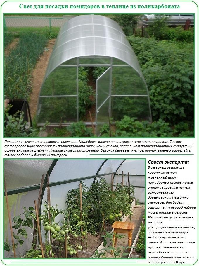 Посадка помидор в теплицу: влияние света на рост томатов