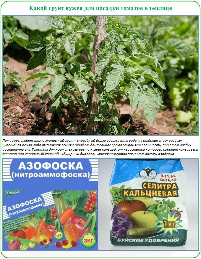 Как и чем удобрить почву для посадки помидор в теплицу