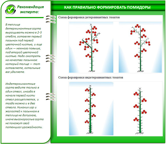 Как формировать томаты в теплице: правила формирования куста.