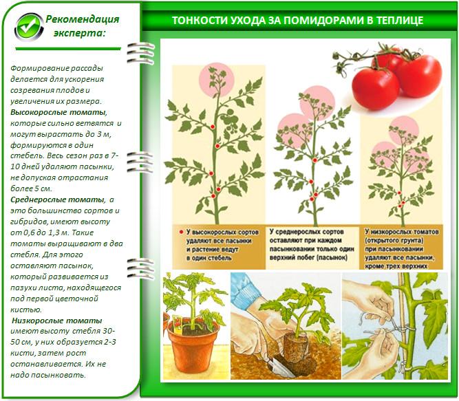 Формирование помидоров в теплице