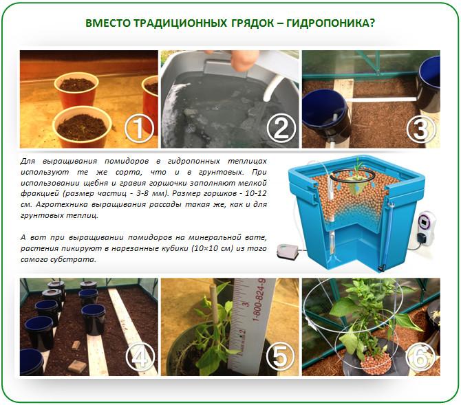 Выращивание помидоров на гидропонике в теплице