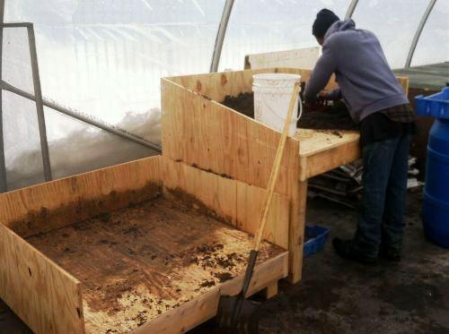 Подготовка почвы в теплице под помидоры весной: как вырастить здоровый урожай