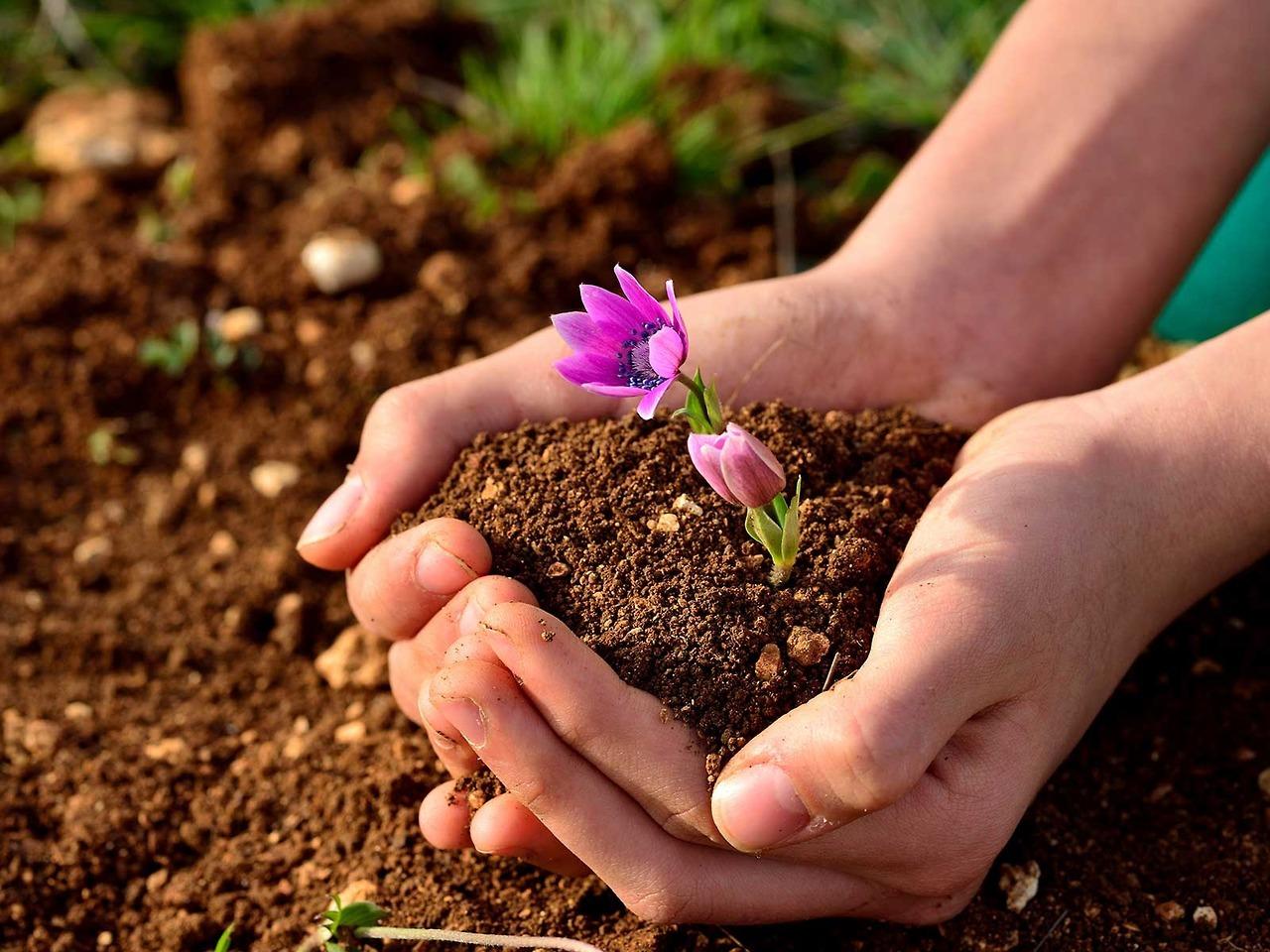 От чего зависит плодородие почвы: 6 важных факторов на заметку дачнику