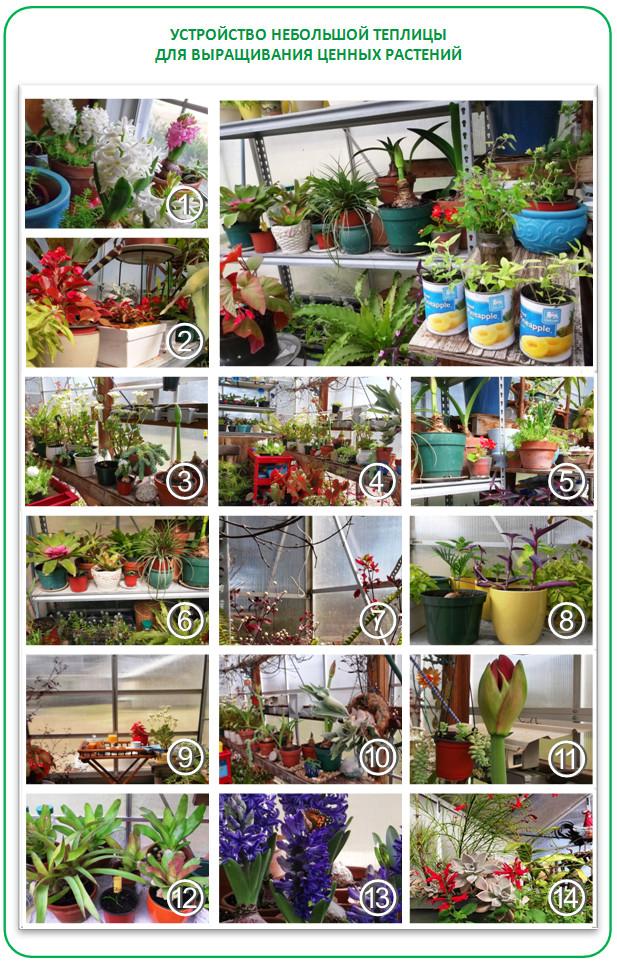 Выращивание цветов в горшках в теплице как бизнес