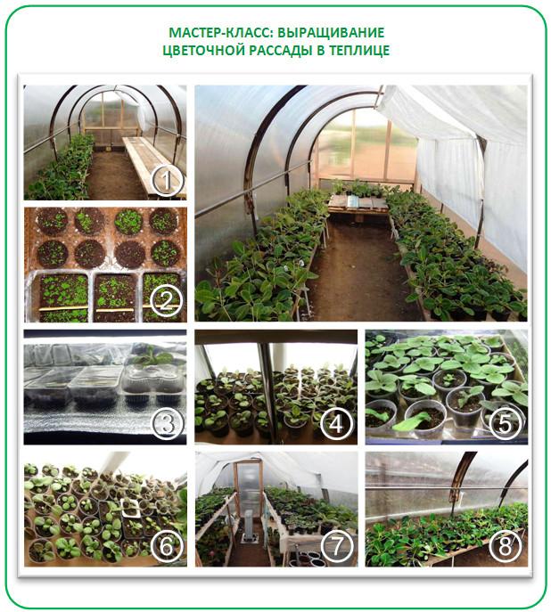 Бизнес на выращивании цветочной рассады