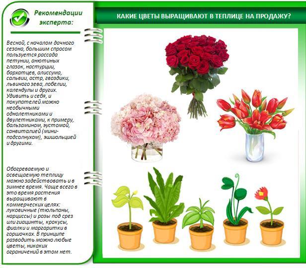 Виды цветов для выращивания в теплице