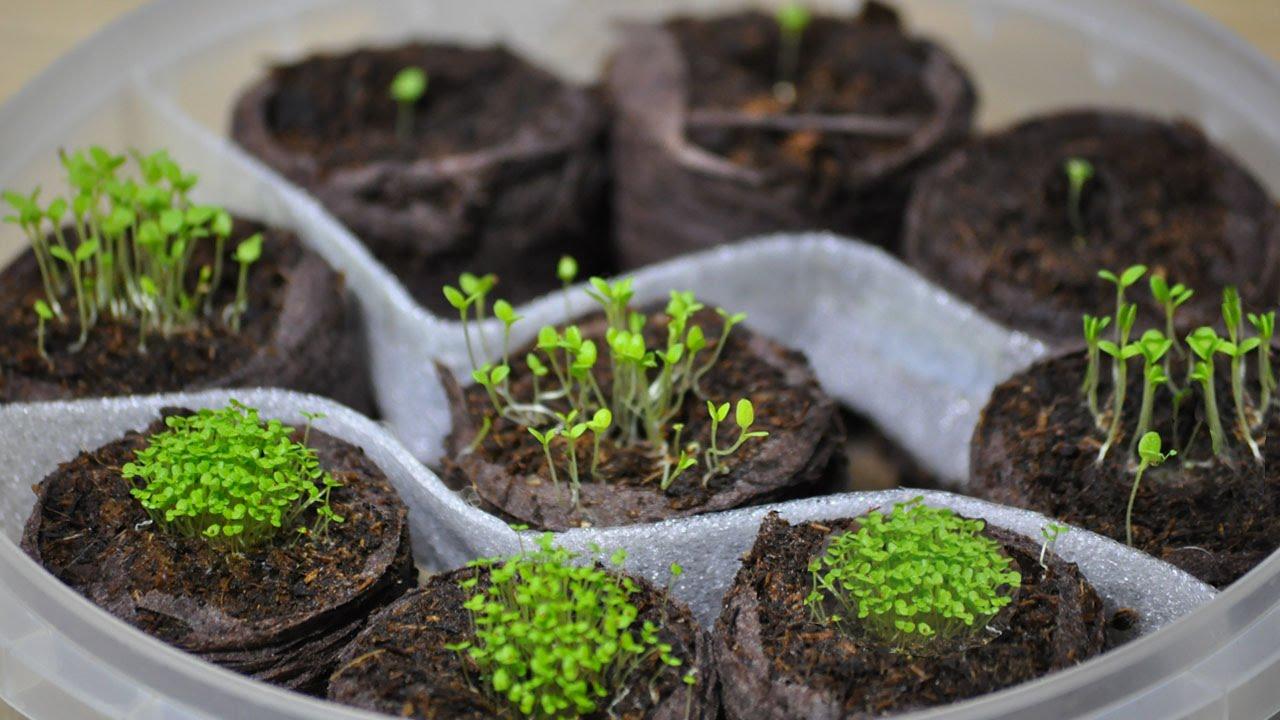 Посадка петунии на рассаду: как правильно вырастить красивые и здоровые цветы?