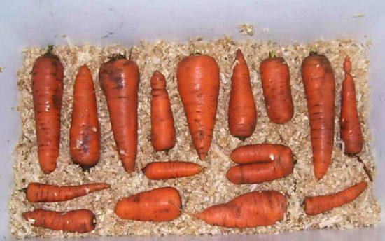 морковь в опилках