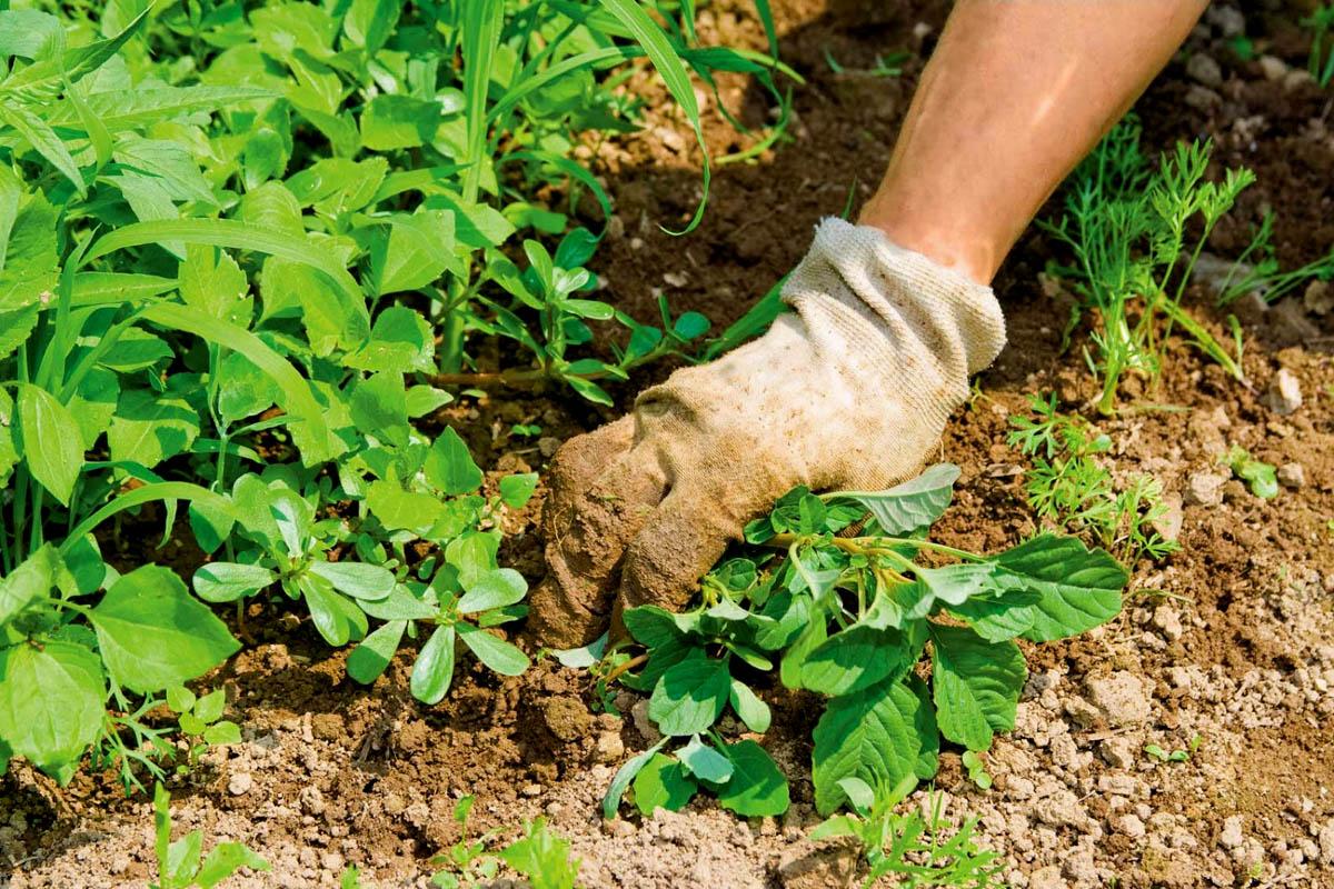 """Cредства от сорняков: как выбрать гербицид + домашние рецепты """"на скорую руку"""""""