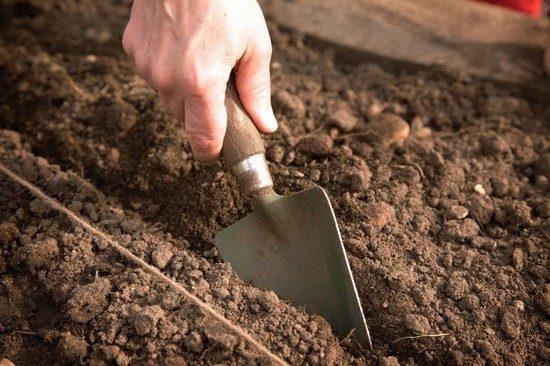 Подготовка бороздок для посева укропа