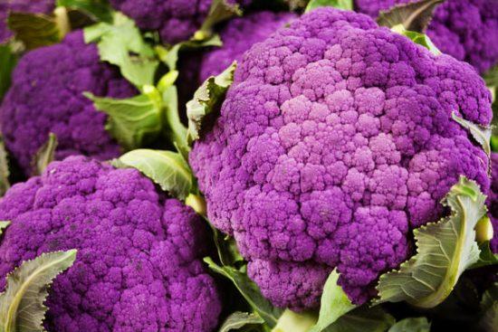 Сорт цветной капусты Пурпурная