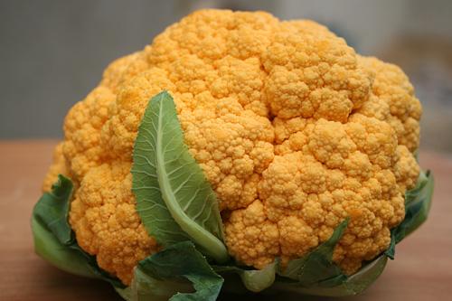 Сорт цветной капусты Ярик