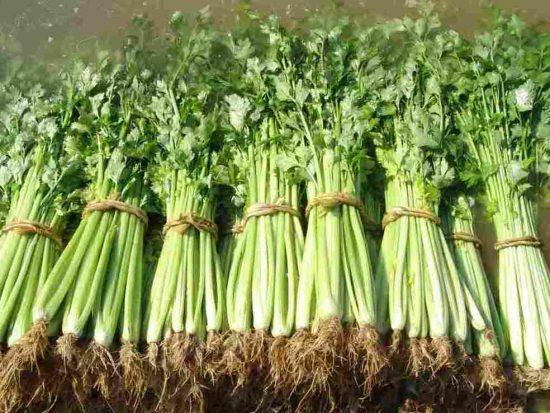 Урожай черешкового сельдерея
