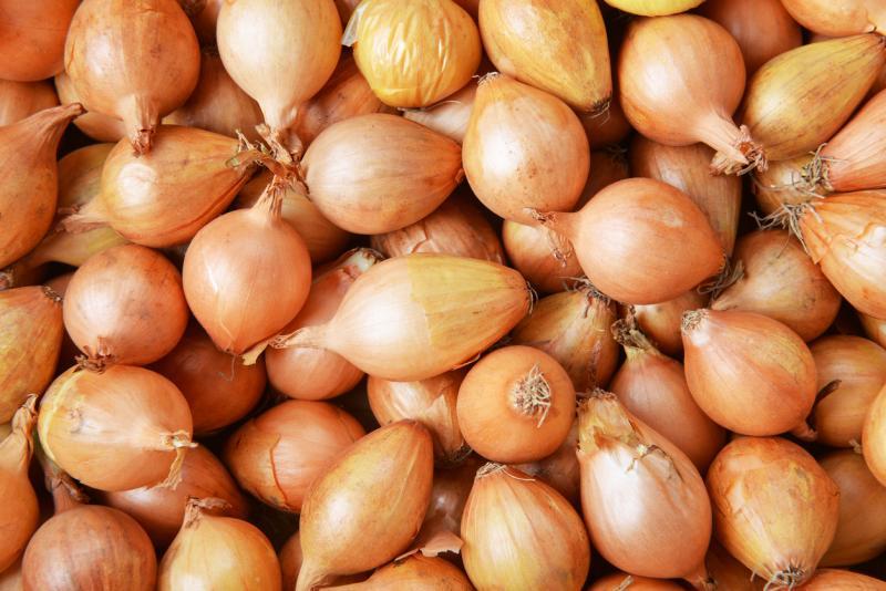 Посев лука: основные правила и полезные советы