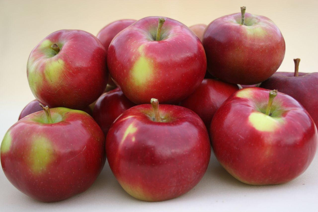 сорта сорта яблок для беларуси в картинках время ремонтных