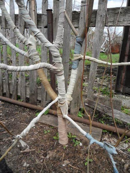 Молодое деревце, подготовленное к зиме