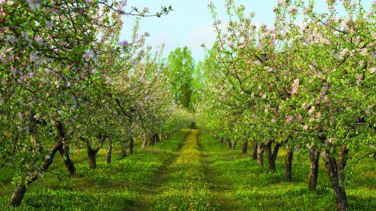 Яблони на гребнях