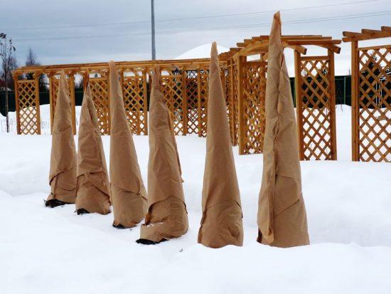 Укрытие деревьев на зиму