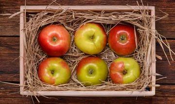 Хранение урожая яблок