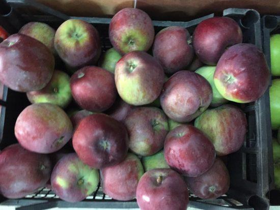 Урожай яблок сорта Имант