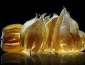 Физалис ананасовый
