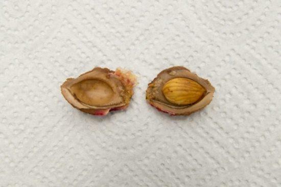 Семя персика