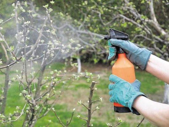 Опрыскивание кроны дерева