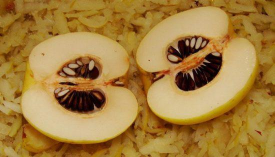 Плод японской айвы в разрезе