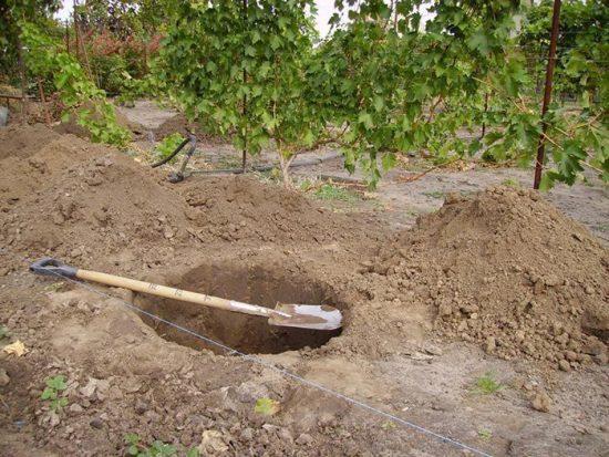 Посадочные ямы для деревьев