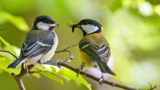 Птицы, поедающие насекомых