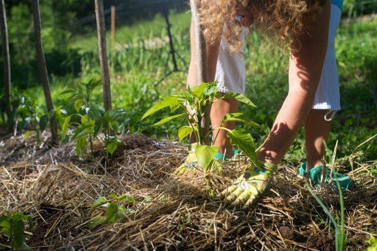 Мульчирование почвы сеном