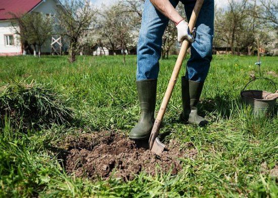 Подготовка ямы для яблони