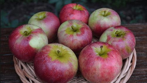 Яблоки сорта Орловский партизан