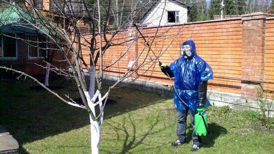 Опрыскивание яблонь от вредителей