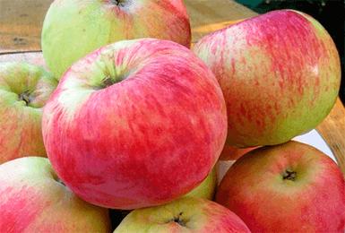 Яблоки сорта Орловим