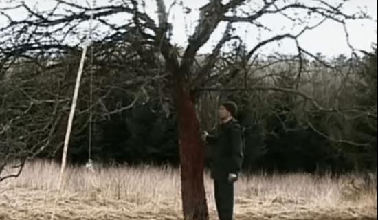 Высокая яблоня