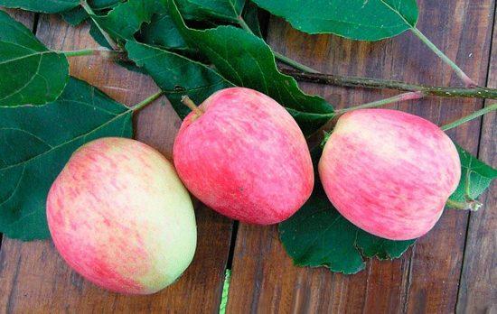 Плоды яблони Аркадик
