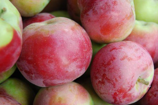 Яблоня сорта Мекинтош