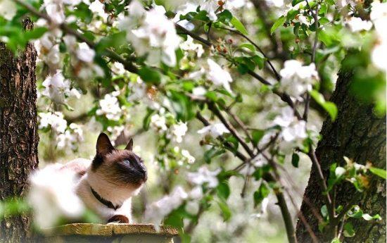 Кот под яблоней