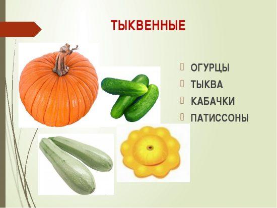 Овощи, относящиеся к семейству Тыквенных