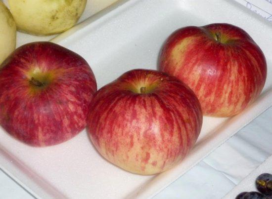 Плоды сорта Коричное полосатое