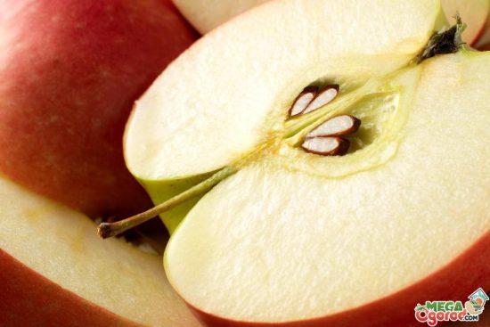 Семена яблони