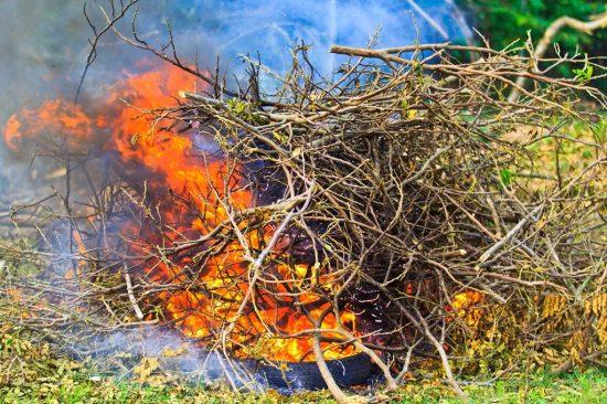 Сжигаем спиленные ветки яблони